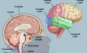 Обнаружены новые особенности работы мозга, связанные с процессом обучения