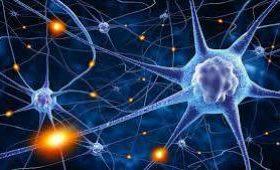 Ученые обнаружили новое свойство клеток мозга
