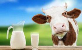 Почва для мутаций: ученых напугал состав украинского молока