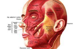 Пластический хирург: как понять, что перед тобой профессионал