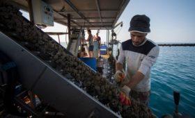 В Крыму зафиксировано резкое снижение популяции диких мидий