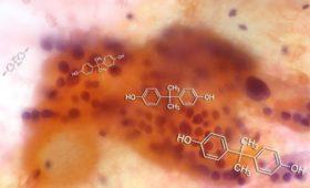 Влияние бисфенола на эндокринную систему может оказаться больше, чем считалось ранее