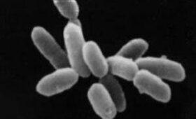 Медики рассказали, чем угрожают человечеству супербактерии